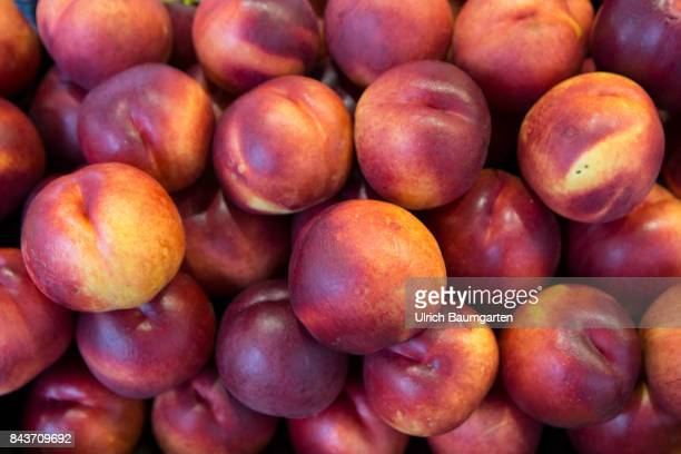 Symbol photo on the topic fruir nutrition health food scandal etc The photo shows nectarines from Spain