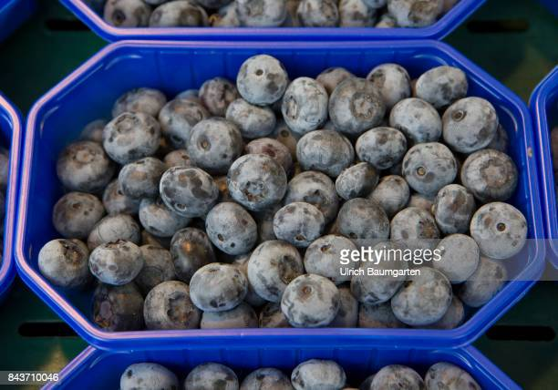 Symbol photo on the topic fruit nutrition health food scandal etc The photo shows blueberries