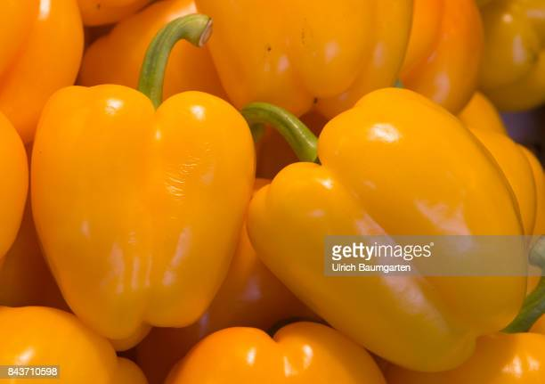 Symbol photo on the topic vegetable nutrition health food scandal etc The photo shows yellow peppers from Spain