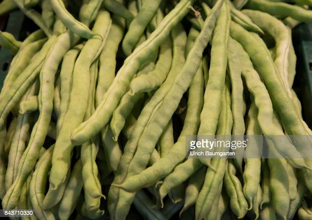 Symbol photo on the topic vegetables nutrition health food scandal etc The photo shows rods beans/climbing beans
