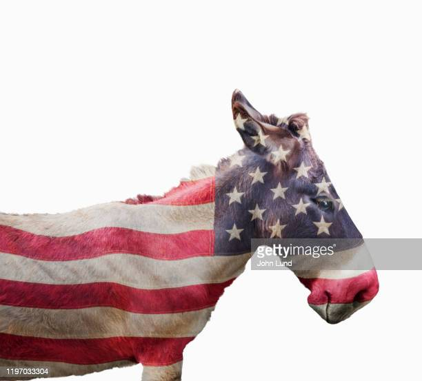 symbolic democratic party donkey - partisan politics stock pictures, royalty-free photos & images