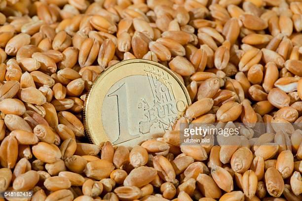 symbolic photo corn price wheat grains and 1 Euro coin
