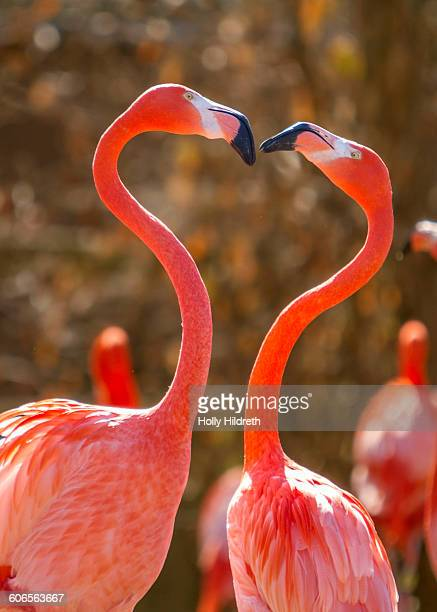 symbols of love - flamingo heart stock pictures, royalty-free photos & images