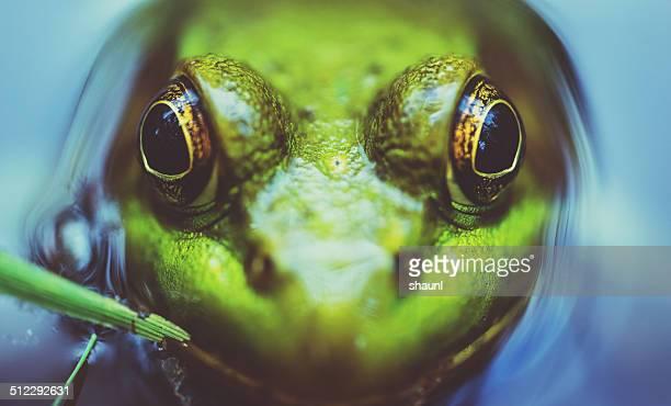 Symmetrical Amphibian