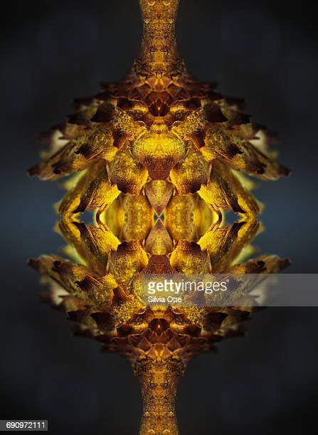 Symmetrical composite of dried flower