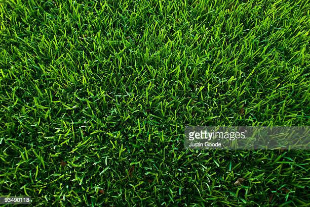 symmetrical grass - grass stock pictures, royalty-free photos & images