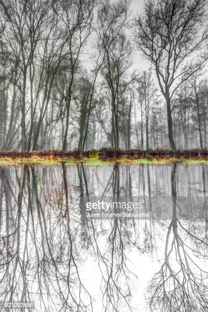 Symmetrical reflection in the water of a forest in winter