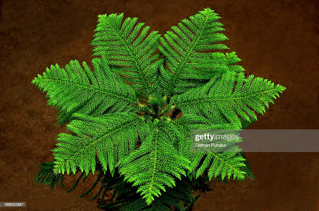 symmetry of a plant leaves : Stock Photo