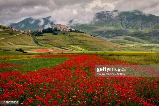 symphony of poppies - カステッルッチョ ストックフォトと画像