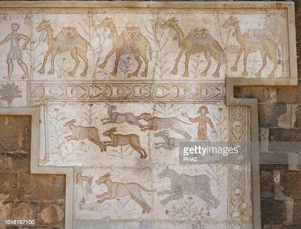 Syria Bosra Daraa District Roman mosaic 6th century discovered in the Theatre Scene of camel caravan and hunting