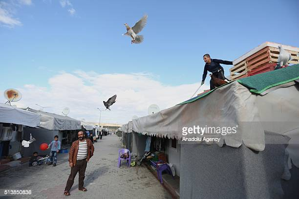 Syrian boy looks at the flying pigeons at the container city housing 1340 women and more than two thousands children who fled war in their country in...