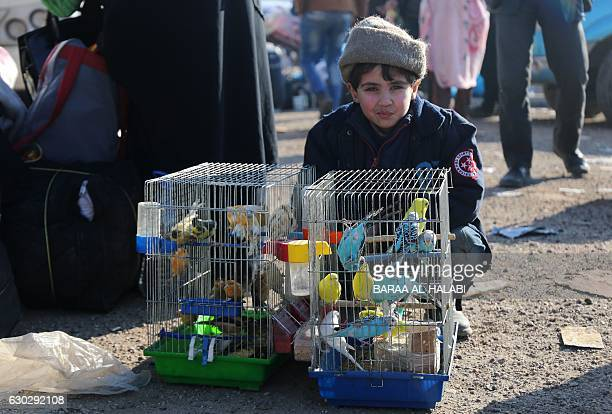 Syrian boy who was evacuated from the last rebelheld pockets of Syria's northen city of Aleppo sits next to bird cages upon arriving on December 20...