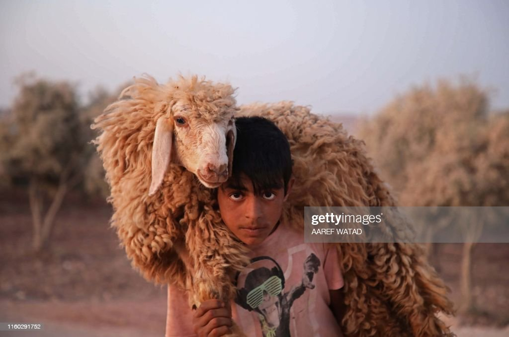 TOPSHOT-SYRIA-CONFLICT-ANIMAL : News Photo