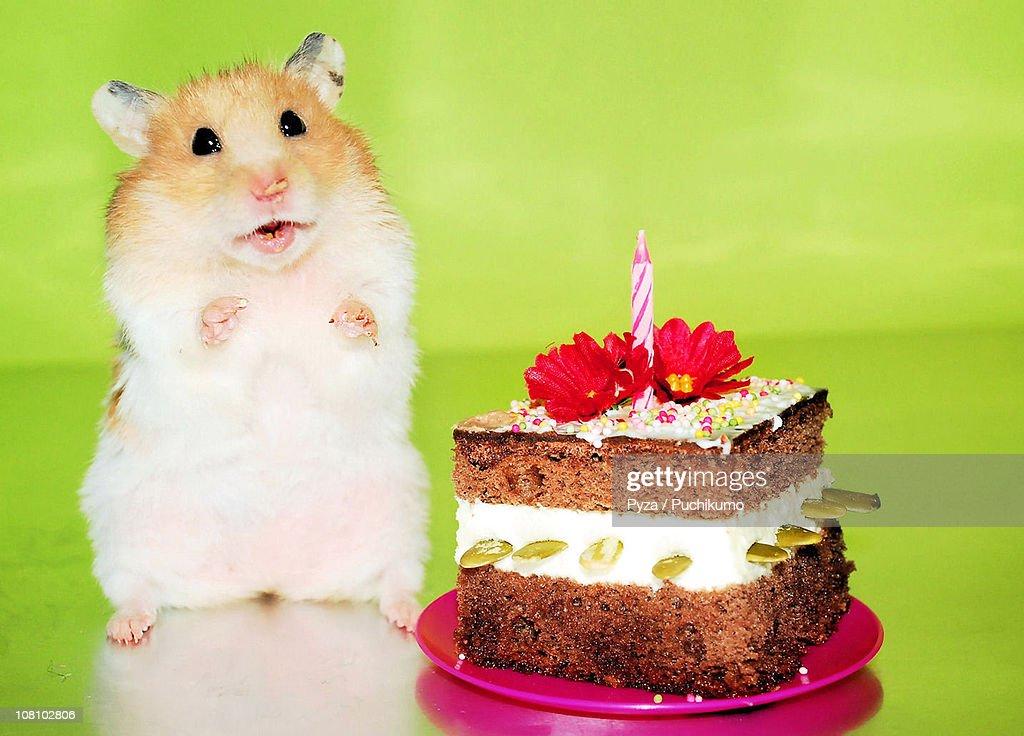 Фнаф картинки, с днем рождения картинки с хомяками