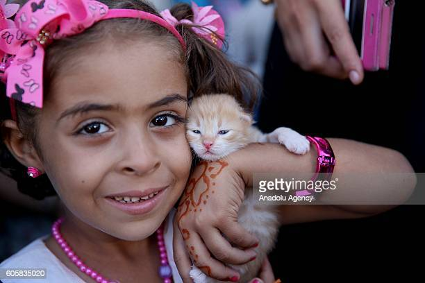 Syrian kids fled from their land due to the Syrian civil war enjoy with the kittens at a refugee camp in Azez town of Aleppo Syria on September 15...