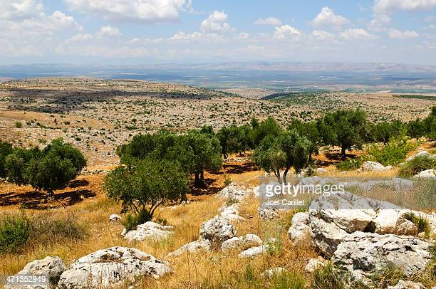 syrian landscape and olive grove outside aleppo, syria - olive orchard stock photos and pictures