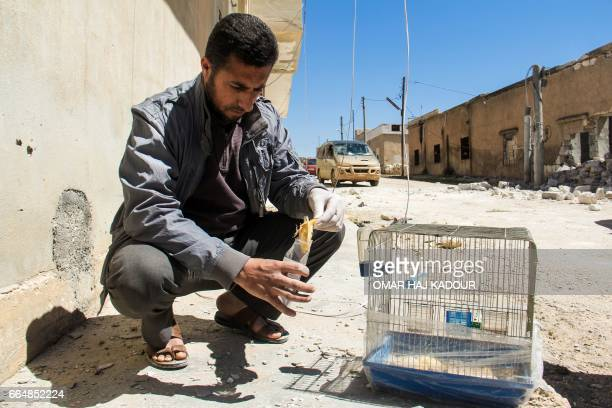 A Syrian man collects and bags the body of a dead bird reportedly killed by a suspected toxic gas attack in Khan Sheikhun in Syrias northwestern...