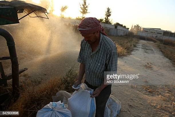 A Syrian man harvests wheat in his field near the rebelheld town of Douma east of the capital Damascus on June 24 2016 Syrians started to harvest...