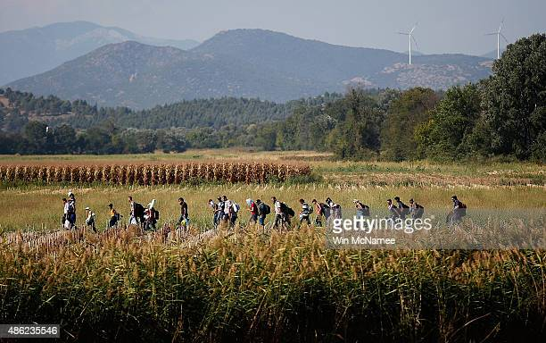 Syrian migrants cross though a cornfield as they walk to a border crossing on the Greek and Macedonian border September 2 2015 near Idomeni Greece...