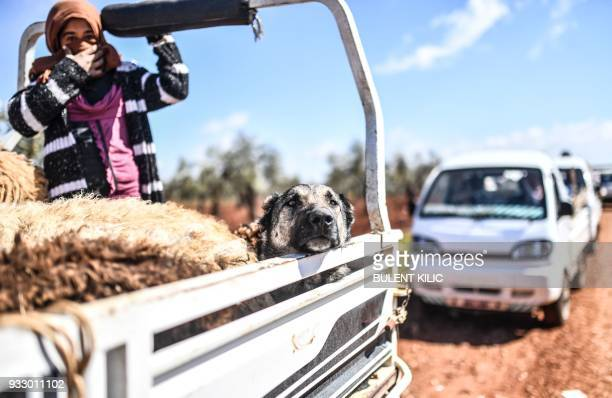 Syrian people arrive at a check point with livestock and a dog in the village of Anab ahead of crossing to the Turkishbacked Syrian rebels side on...