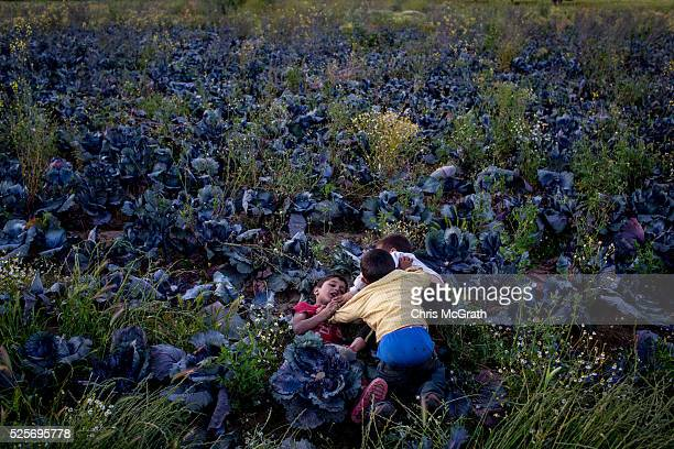 Syrian refugee children play amongst a field of cabbages at a tent camp on the outskirts of Izmir on April 27 2016 in Izmir Turkey For many Syrian...