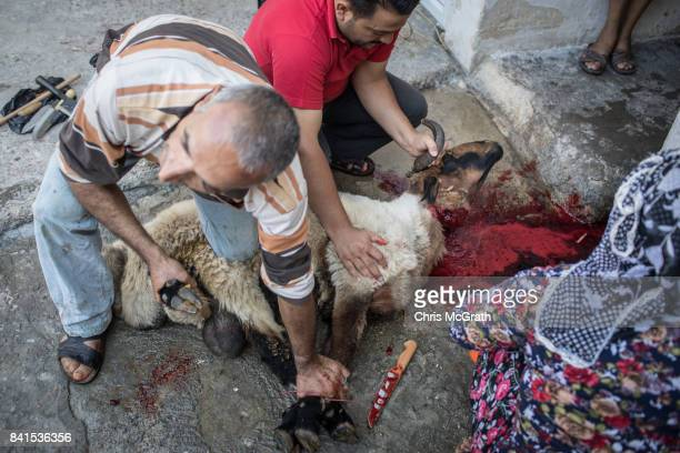 Syrian refugee Husin Lok slaughters a sacrificial sheep with family members at their home during EidalAdha celebrations on September 01 2017 in Kilis...