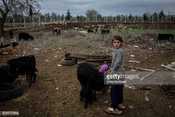 Syrian refugee Vermin and sister Yasmin work at a farm on March 3, 2016 in Kilis, Turkey. Kilis a city located just 10km from the Syrian border and...