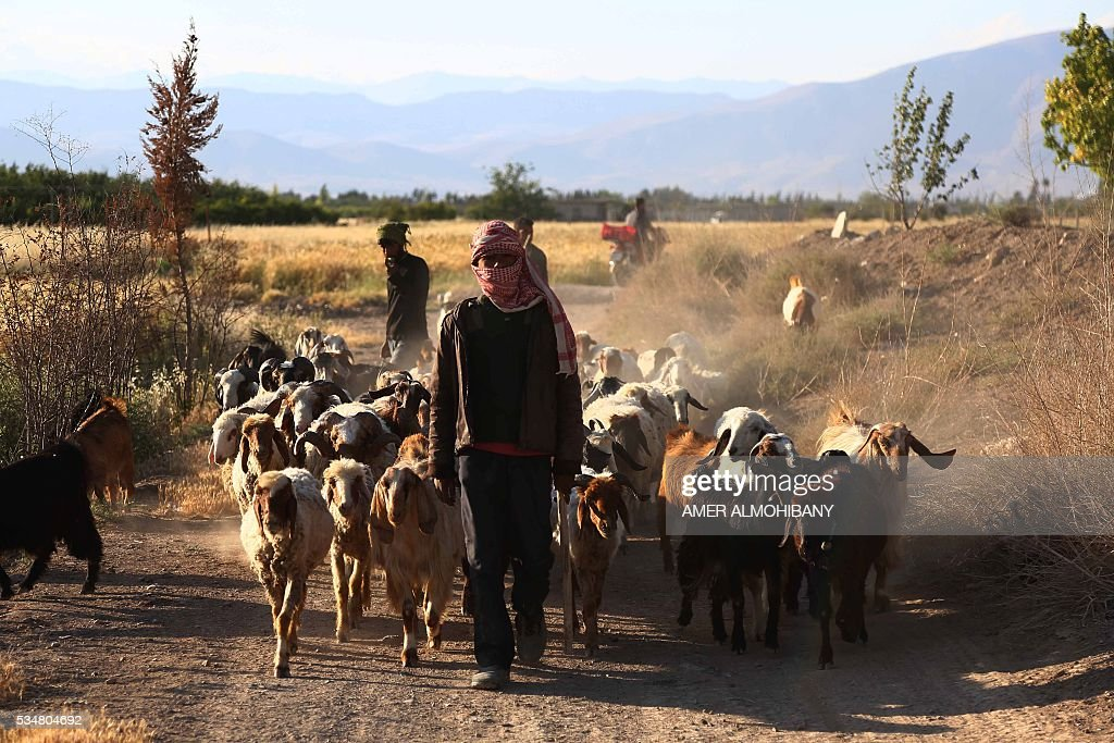 SYRIA-CONFLICT-AGRICULTURE : News Photo