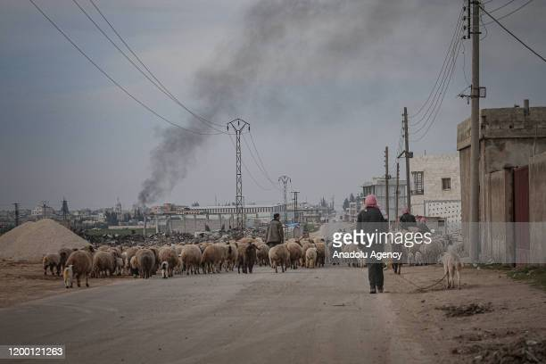 Syrian shepherds and their flock of a sheep who have been forced to displace due to the ongoing attacks carried out by Assad regime and Russia are...