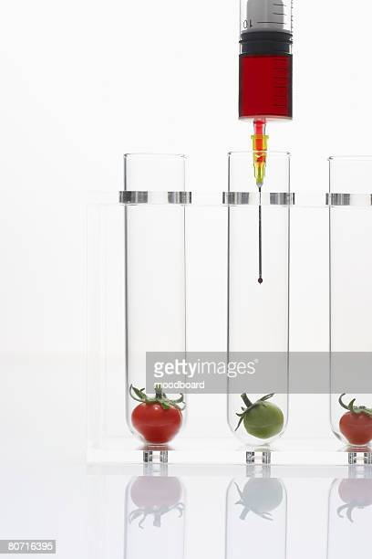 syringe injecting red and green tomatoes in test tubes - studio shot stockfoto's en -beelden