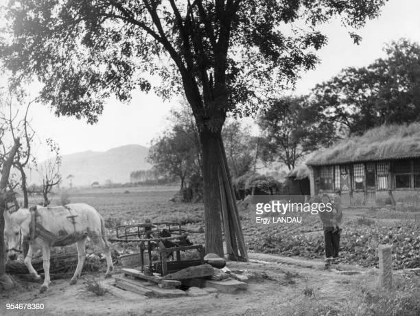 Système d'irrigation d'une ferme actionné par un cheval en Chine circa 1950