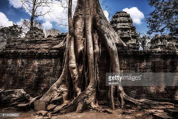 Ta Prohm Ruinen von Angkor, Kambodscha
