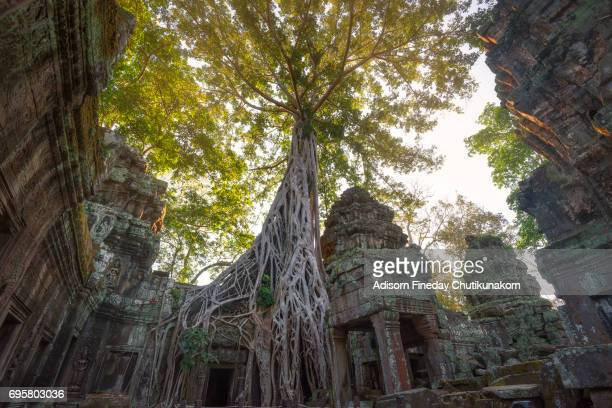 ta prohm angkor wat cambodia - angkor stock photos and pictures