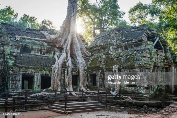 ta prohm angkor wat siem reap temple, cambodia - cambodia stock pictures, royalty-free photos & images