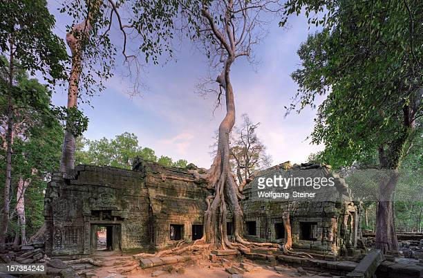 ta prohm before sunset - angkor stock photos and pictures