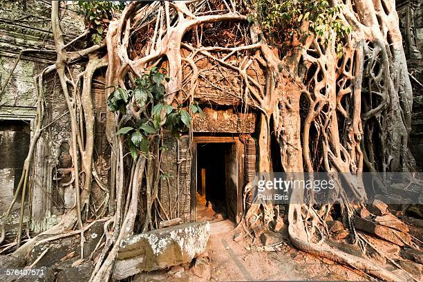 Ta Prohm  jungle temple, Siem Reap, Cambodia