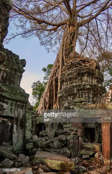 Ta Prohm. Now overrun by towering trees from the surrounding forest. Was an ancient Buddhist temple and pilgrimage site. Still regarded as such by...