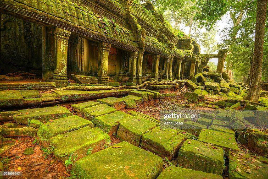Ta Prohm, Siem Reap, Cambodia : Stock Photo