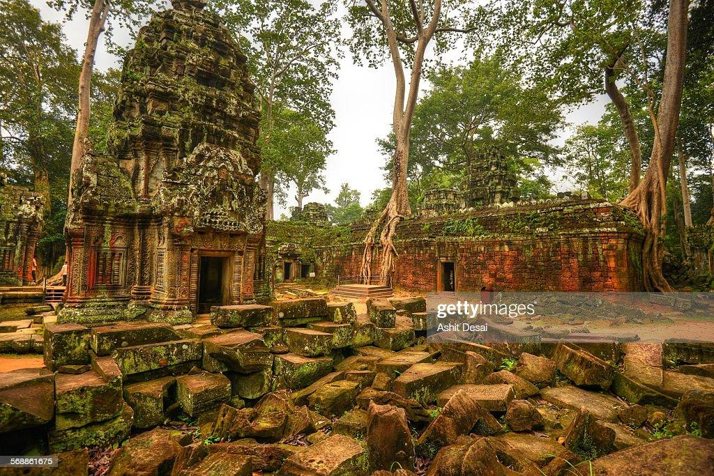 Ta Prohm, Siem Reap, Cambodia : Foto de stock