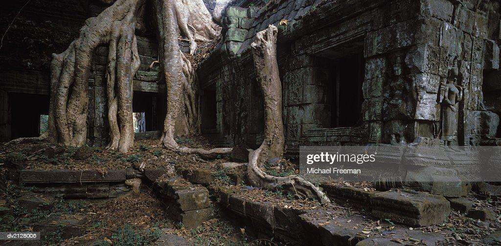 Ta Prohm Temple, Angkor Wat, Angkor, Cambodia, Asia : Stock Photo