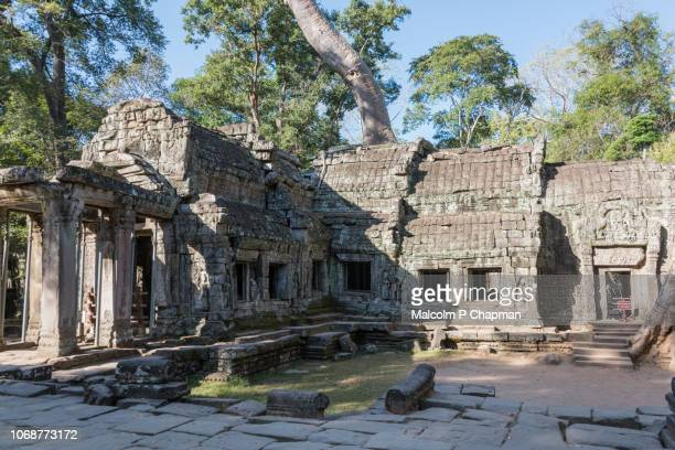"ta prohm temple in ankgor, siem reap, cambodia also known as rajaviharain or 'jungle temple' - cambodia ""malcolm p chapman"" or ""malcolm chapman"" stock pictures, royalty-free photos & images"
