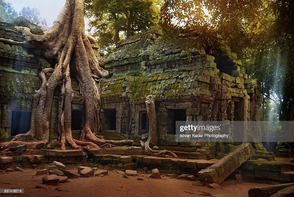 Ta Prohm Temple in Cambodia : ストックフォト