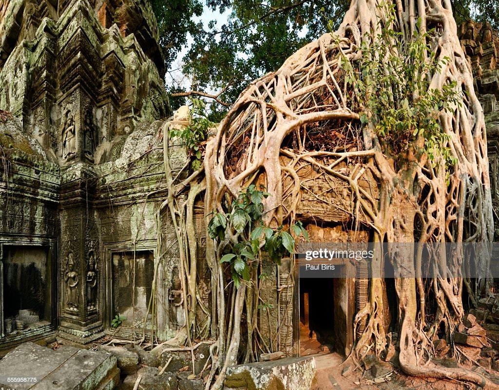 Ta Prohm Temple, Khmer Empire, Cambodia : Stock Photo