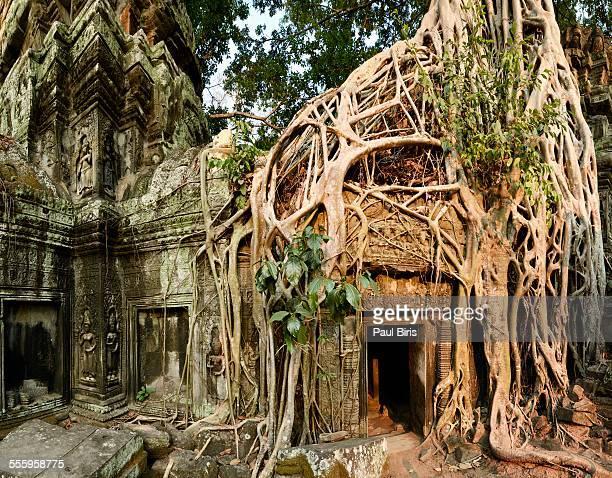 Ta Prohm Temple, Khmer Empire, Cambodia