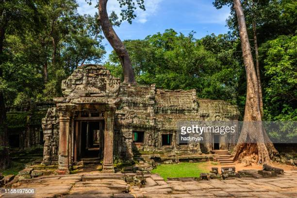 ta prohm temple near angkor wat, cambodia - ancient civilisation stock pictures, royalty-free photos & images