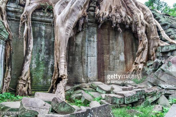 ta prohm temple overgrown with root of sacred fig tree - khmer stock pictures, royalty-free photos & images