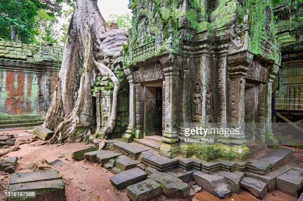 ta prohm temple. siem reap. cambodia - marco brivio stock pictures, royalty-free photos & images