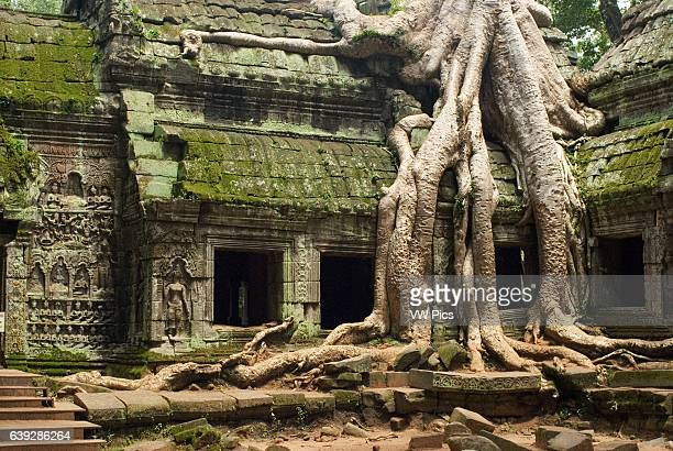 Ta Prohm Temple Ta Prohm's state of ruin is a state of beauty which is investigated with delight and left with regret Ta Prohm is locating southwest...