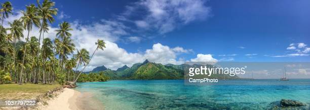 taahiamanu beach park - tahiti stock pictures, royalty-free photos & images