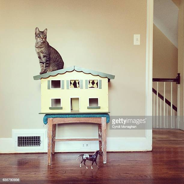 tabby cat and dollhouse - perching stock pictures, royalty-free photos & images